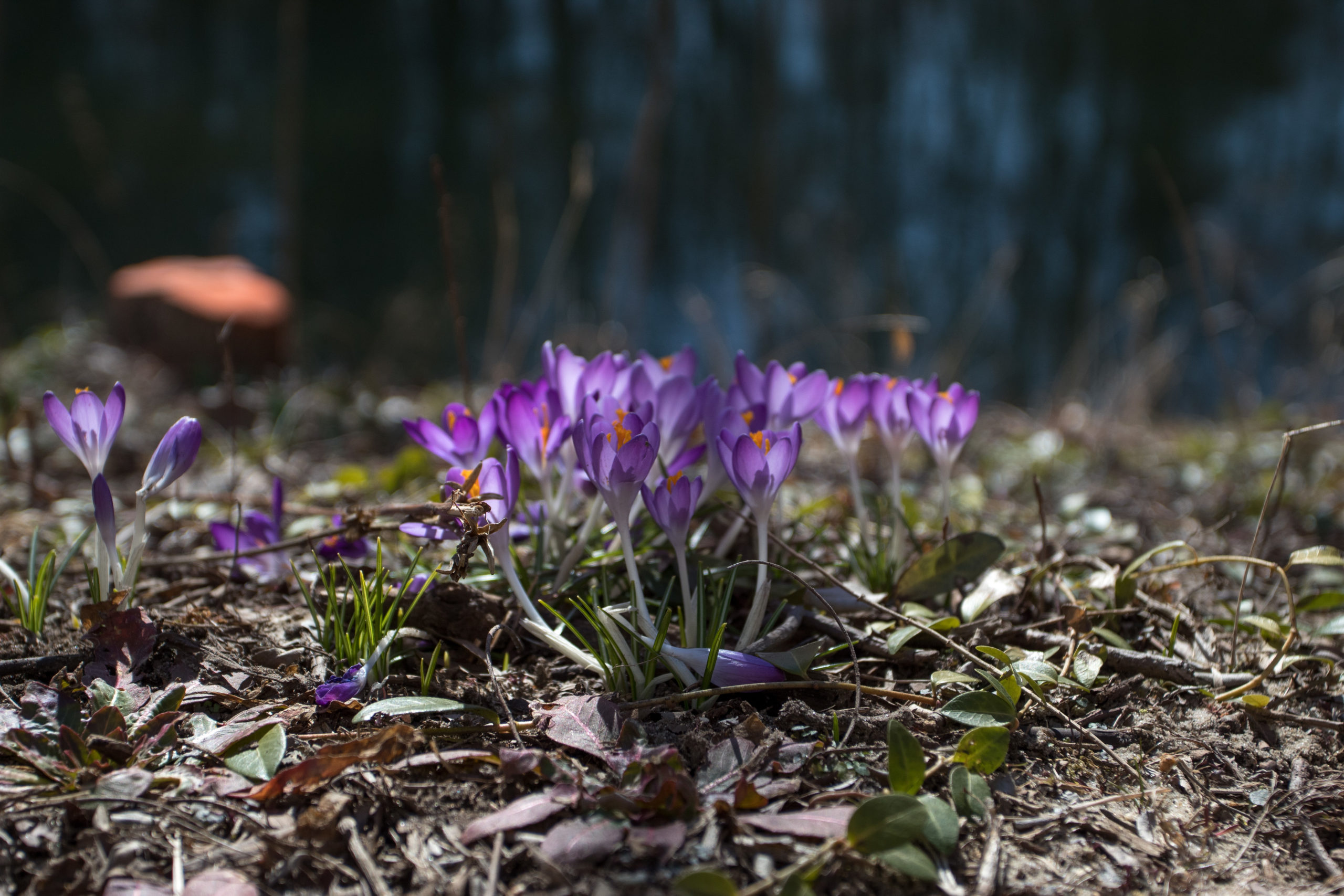 Spring is in the air and flowers are once again in bloom! Photo via multimedia editor/Alex Rossen